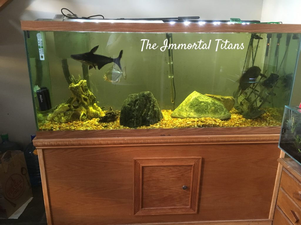 A fish tank stocked with enormous fish