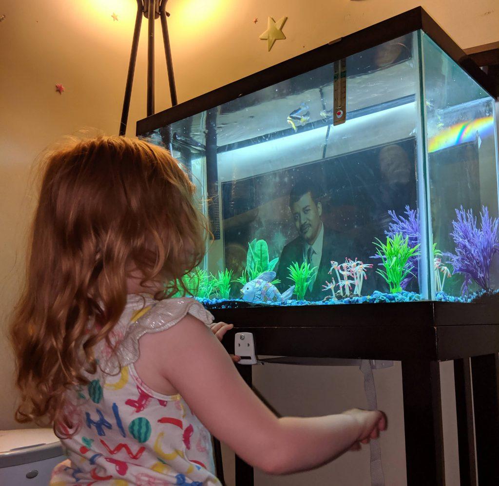 Riley gazing at her fishtank